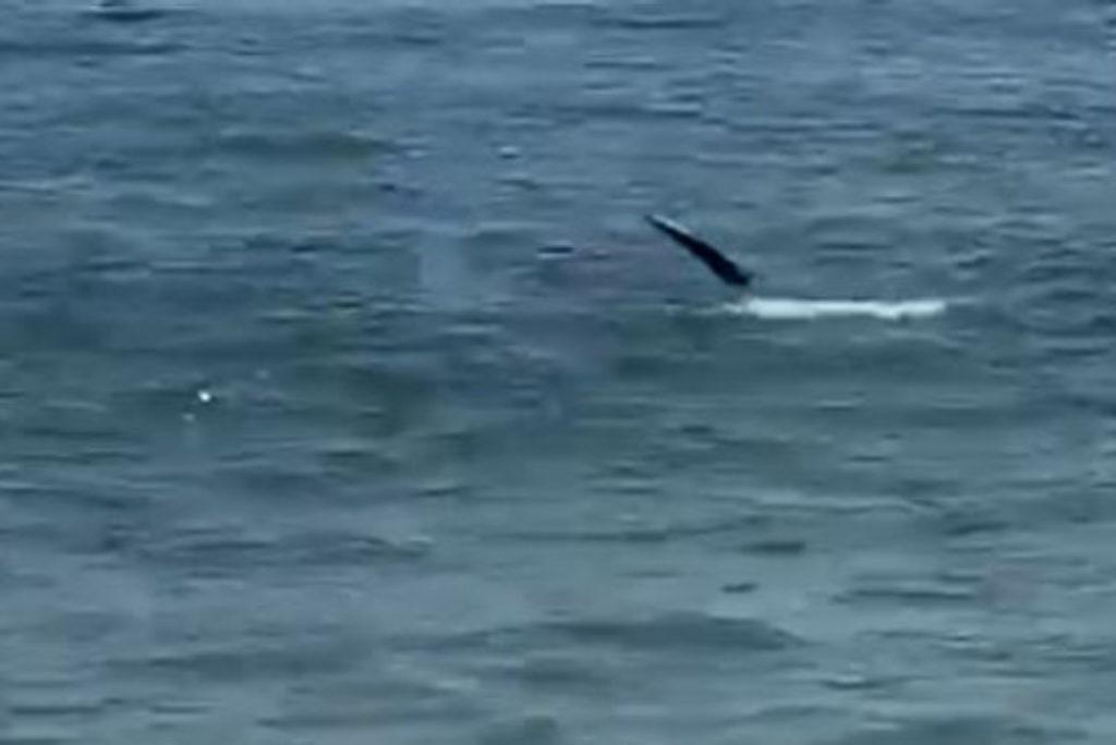 Shark spotted near Rhode Island shore