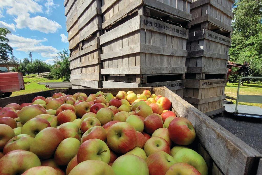 33rd annual Apple Festival returns to Johnston this weekend