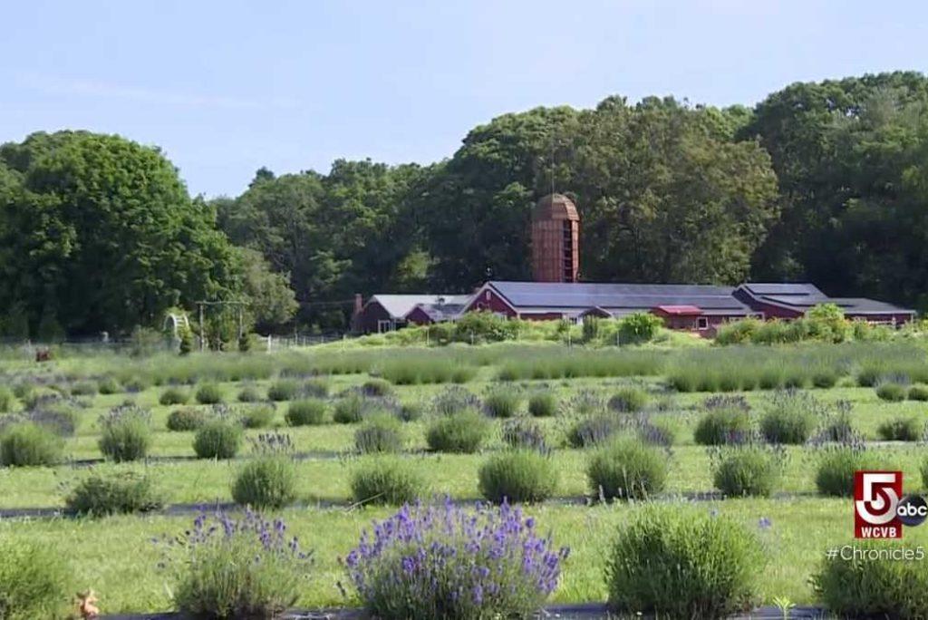 Head south to Rhode Island for no-till farming at Petals Farm; take a deep breath and relax at Lavender Waves Farm