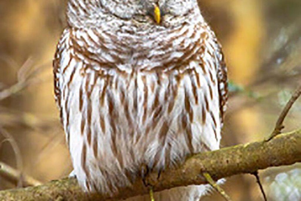 Audubon Society of R.I. announces nature programs